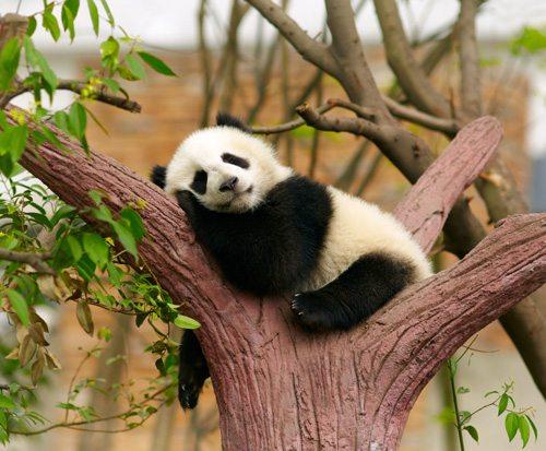 Baby Panda from Panda Press, Stone.